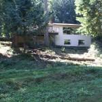 a weedy hillslope below the deck - 2009