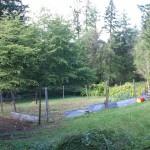 the lower garden - 2009