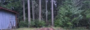 grove before
