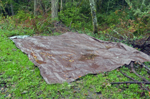 A tarp used to reduce reed canary grass.