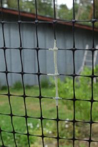 Eggs on my deer fencing are a common occurrence in late summer. I am assuming they are butterfly eggs, but I've never seen the parent organism.